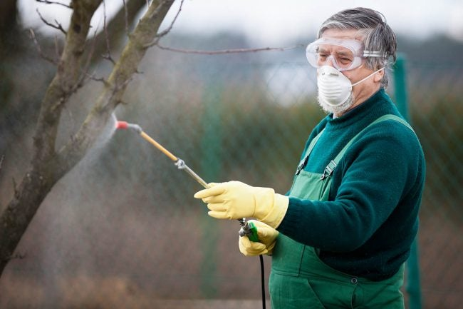 When to Spray Fruit Trees: Dormant Spray in Late Winter