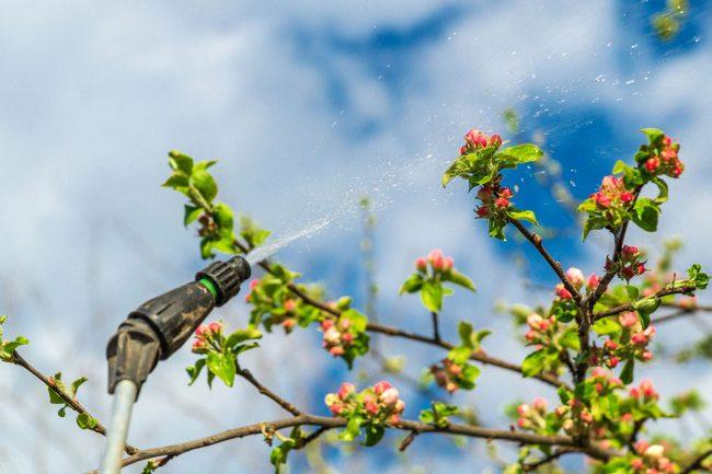 When to Spray Fruit Trees: General Purpose Fruit Tree Spray During the Growing Season