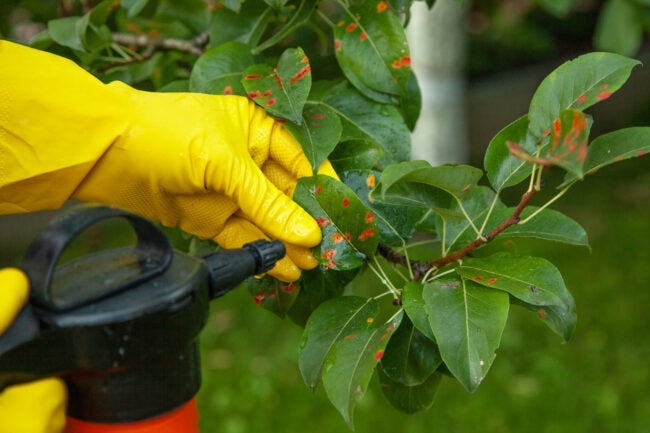 best-insecticides-for-vegetable-gardens