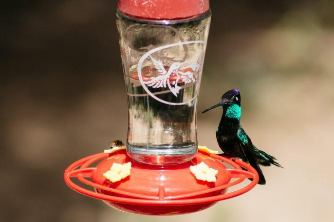 Best Hummingbird Feeder Options