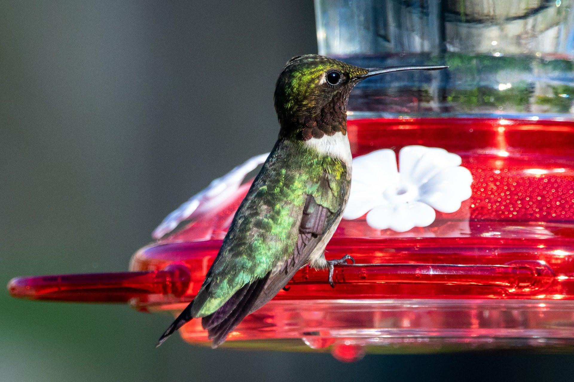 The Best Hummingbird Feeders For Your Garden Bob Vila
