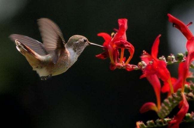 Where Do Hummingbirds Live