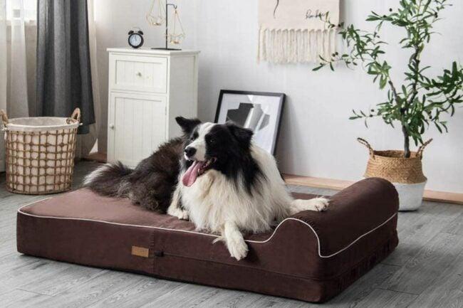 The Best Dog Beds Option