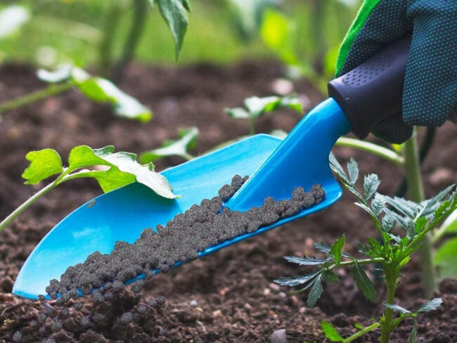 The Best Organic Fertilizer Options