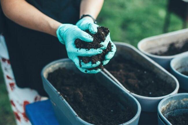 最好的灌封土壤选项