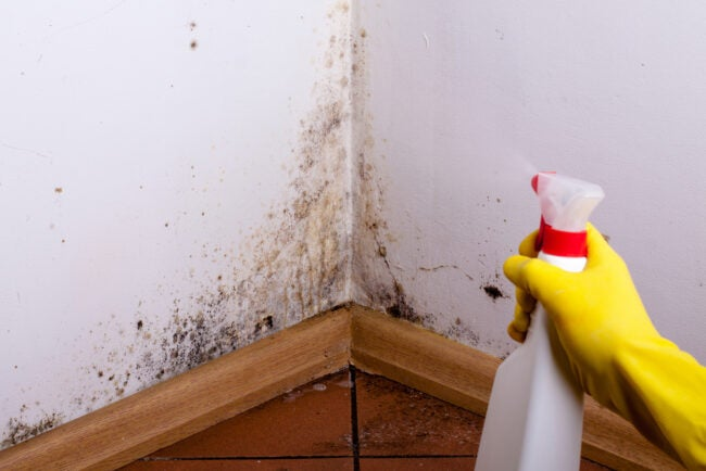 Best Mold Remover Options