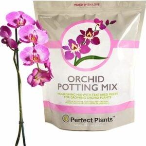最佳盆栽土壤选择:完美植物所有天然兰花盆栽混合4 qt