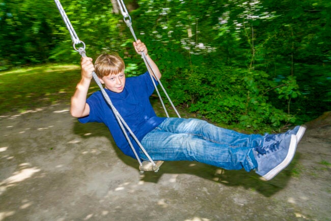 Best Tree Swing Options
