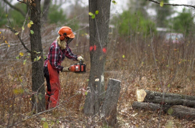The Best Chainsaw Chaps for Protection on the Job