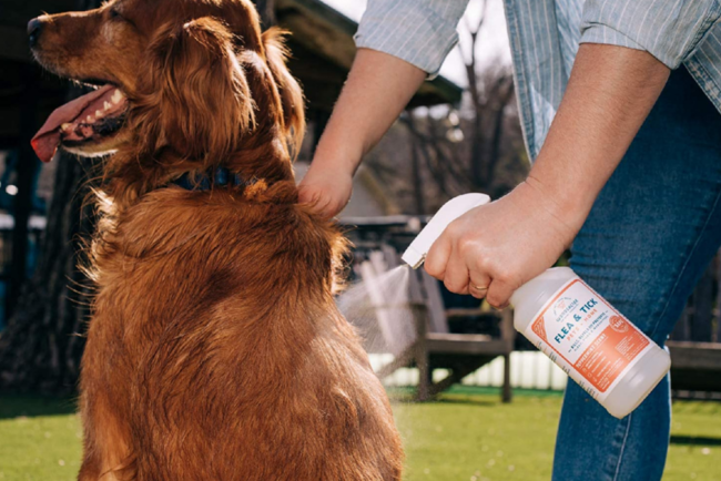 The Best Flea Spray Options