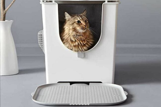 The Best Litter Box Option