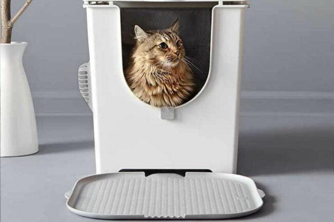 最好的猫砂盒选择