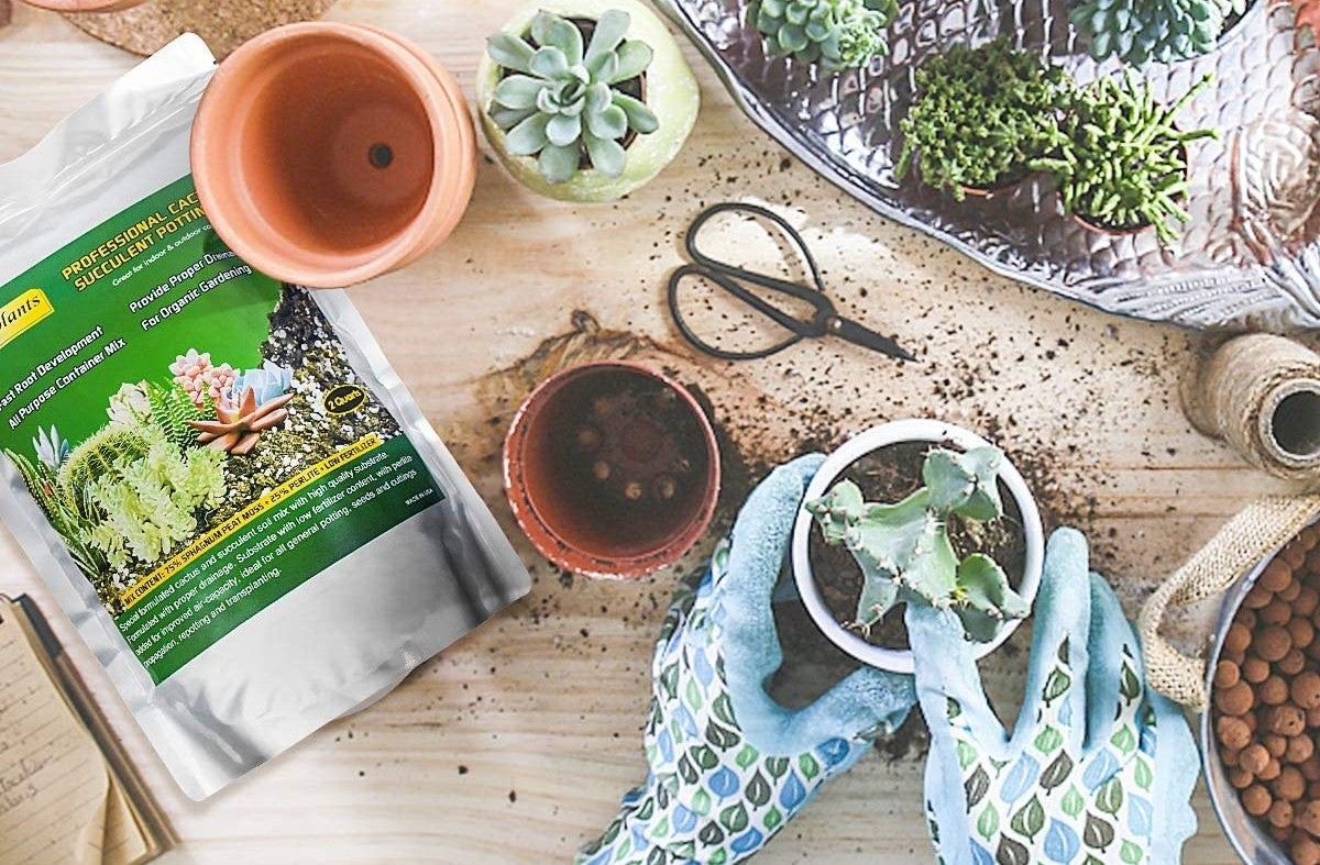 The Best Soil For Succulents Indoors And Out Bob Vila