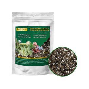 Best Soil For Succulents Organic