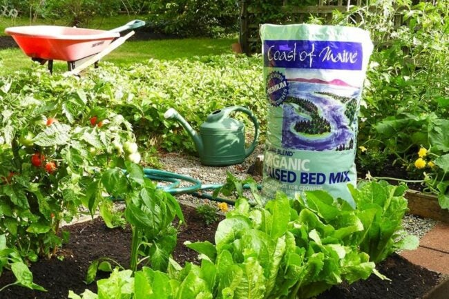 The Best Soil for Raised Beds Option