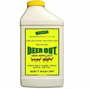 最佳驱鹿剂选择:鹿出32盎司浓缩驱鹿剂
