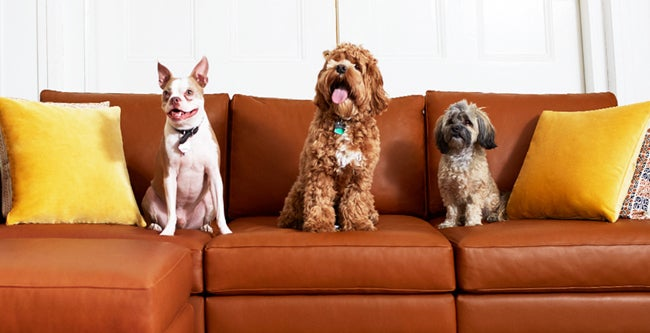 Allform modular sofa with three dogs