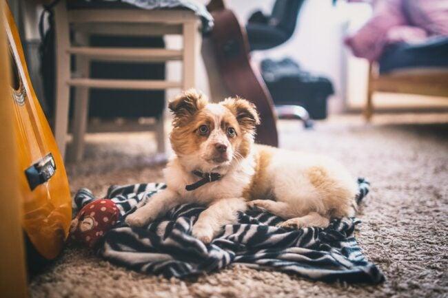 Best Carpet for Pets Options