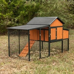The Best Chicken Coop Options for the Homestead: Producer's Pride