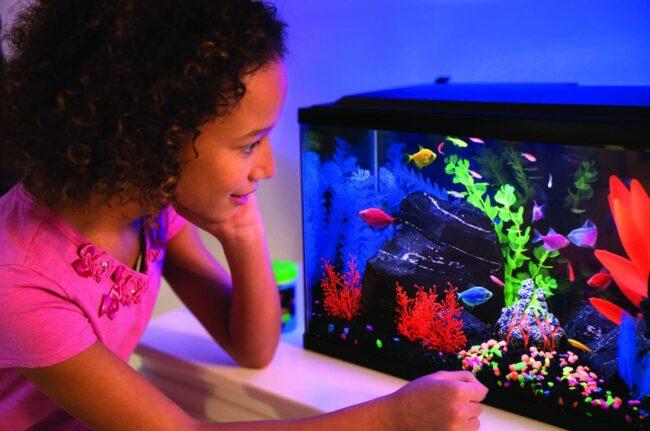 The Best Fish Tanks