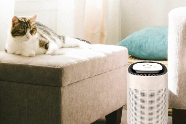 The Best Air Purifier for Pets Option