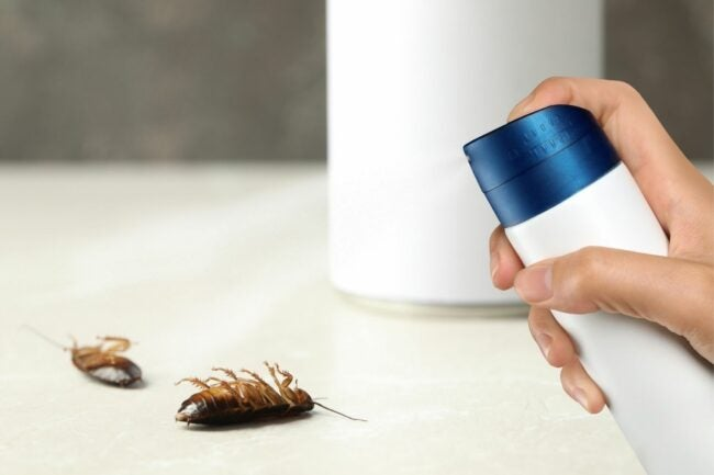 The Best Insecticide Option