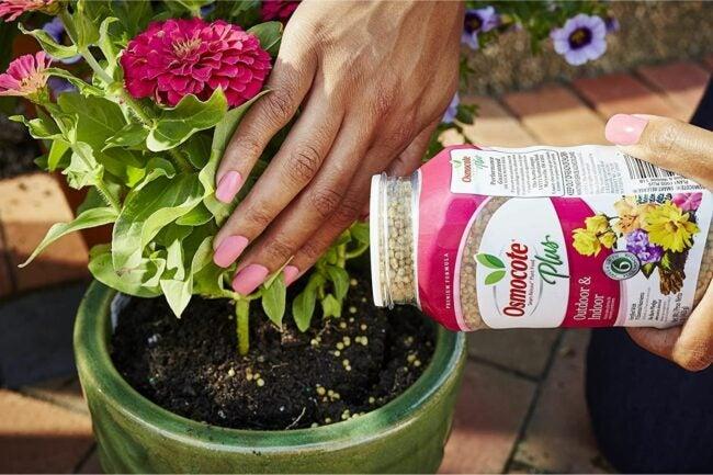 最好的植物食品选择