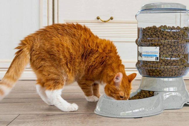 The Best Automatic Cat Feeder