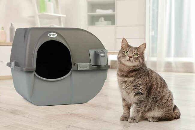 The Best Automatic Litter Box Option