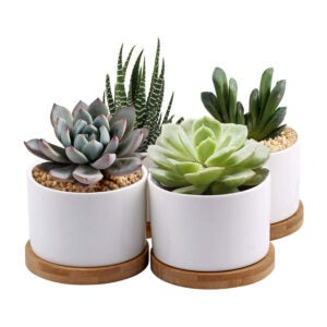 The Best Planters and Pots Option: ZOUTOG Succulent Planter, White Mini 3.15-inch