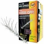 The Best Bird Deterrent Option: Bird-X STS-10-R Stainless Steel Bird Spikes