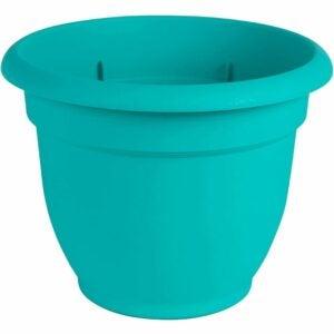 """最好的自浇浇水种植园选项:Bloem Ariana自浇水播种机,6"""""""
