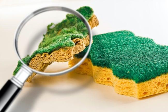 bacteria sponge
