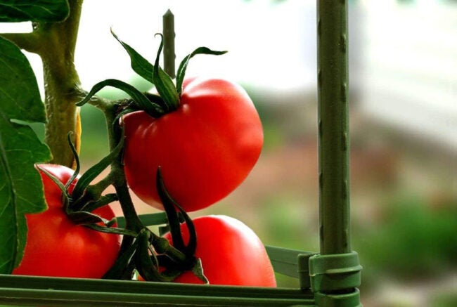 Best Tomato Cages Options