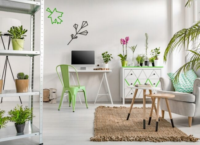 Room decorated with beautiful house plants