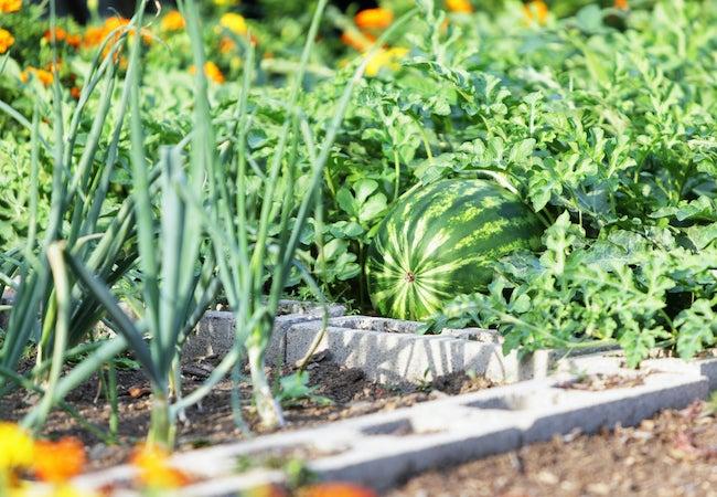 no-dig gardening method