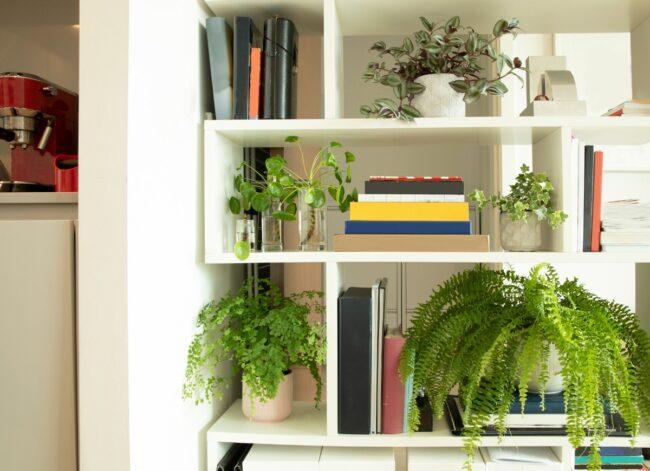house plants on a book shelf