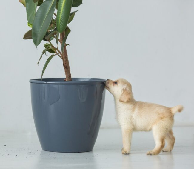 puppy looking at house plant