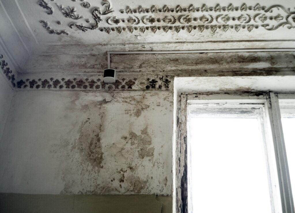 Moldy Ceiling