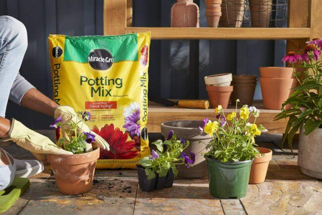The Best Soil For Roses Option