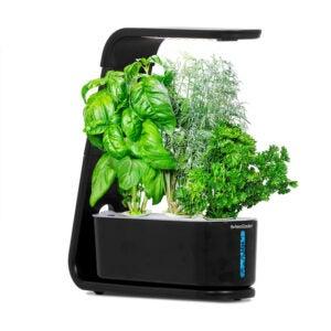 The Best AeroGarden Option: AeroGarden Sprout