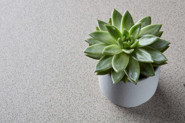 The Best Indoor Succulent Options