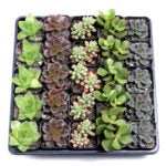 The Best Indoor Succulent Options: Mountain Crest Gardens Indoor Succulent Tray