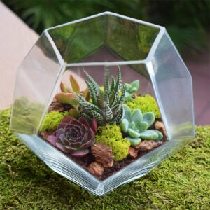The Best Indoor Succulent Options: Simply Succulents Crystal Terrarium Kit