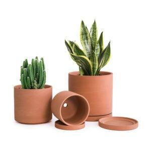 芦荟植物的最佳罐子选项:D'vine Dev Terracotta植物罐