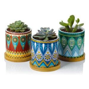 The Best Pots for Aloe Plants Option: Greenaholics Succulent Plant Pots 3-Inch Mandala