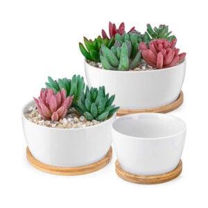芦荟植物的最佳罐子选项:蜂廷白色多汁植物盆,套3