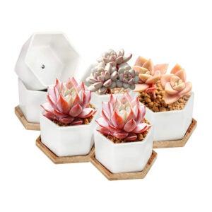 最佳芦荟花盆选择:OAMCEG 4英寸肉质花盆,一套6个