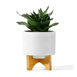 The Best Pots for Aloe Plants Option: POTEY Mid Century Ceramic Pot with Wood Stand