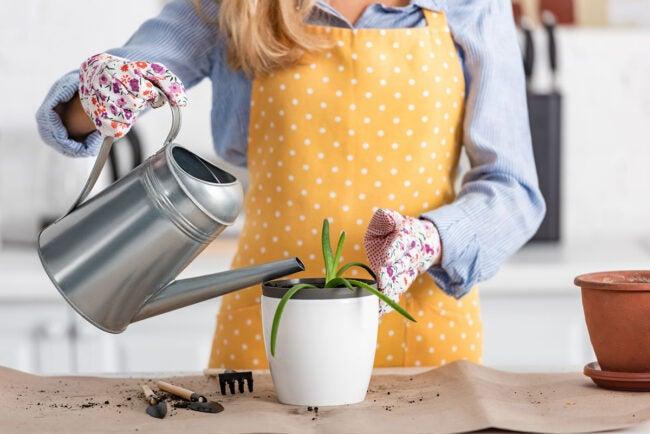 芦荟植物的最佳罐子